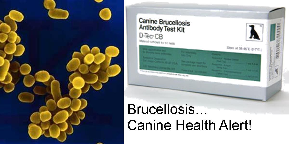 Brucellosis... Canine Health Alert!
